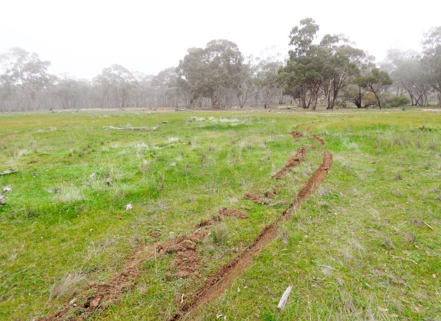 greenfleet-revegetating-180-ha-of-overgrazed-land-in-central-victoria-870x635px