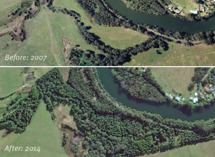 greenfleet-forest-before-and-after-spot-the-difference-870x635px